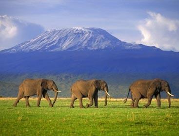 Safari Gratuit a Gagner